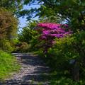 写真: 秘密の小路を進むと・・・