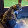 写真: ネコ君のお出迎え