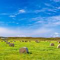 写真: 牧草ロールの空