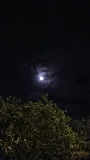 今夜の月もきれいだった♪