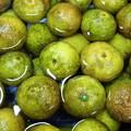 写真: 柚子の果汁を絞ってます。実をタワシで洗う→乾かす→切る→絞る→詰...