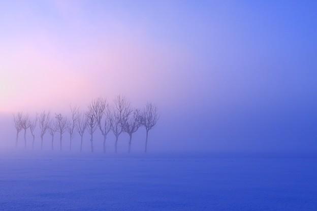 霧の中から