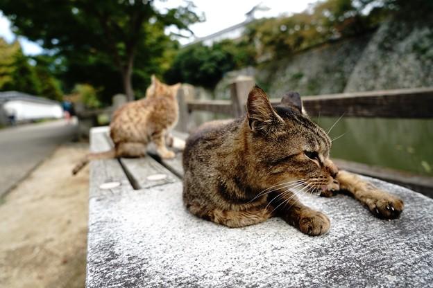 姫路城のにゃんこ (11)