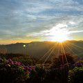 Photos: 美の山公園の紫陽花と朝日