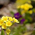 Photos: Spring Yellow
