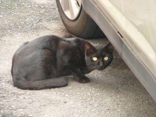 警戒黒猫2