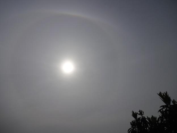 今日の日暈は色々見えてる気がする