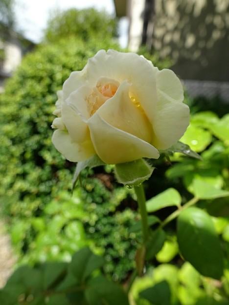 名称不詳 ベージュ(7/22)