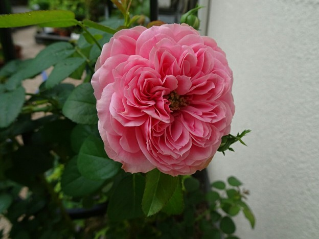 レオナルド・ダ・ビンチ(8/15)