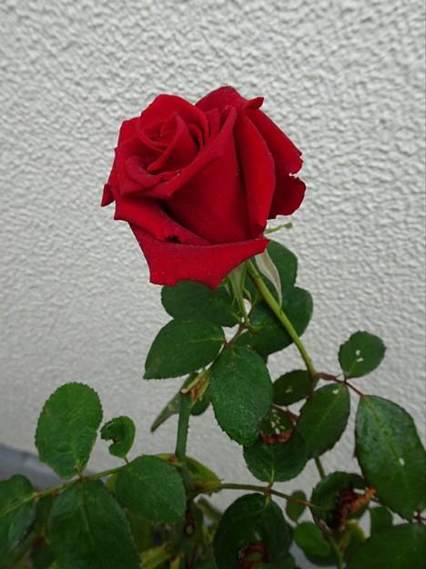 名称不詳 赤(11/17)