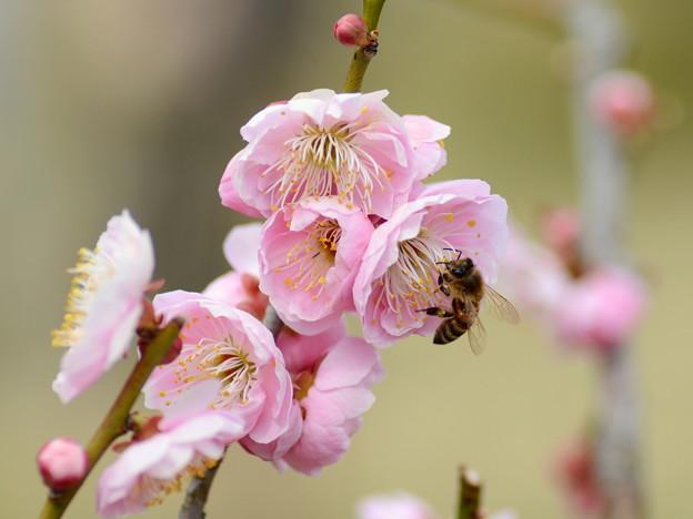Honeybeehunter-4