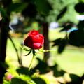 Photos: DSC_2515
