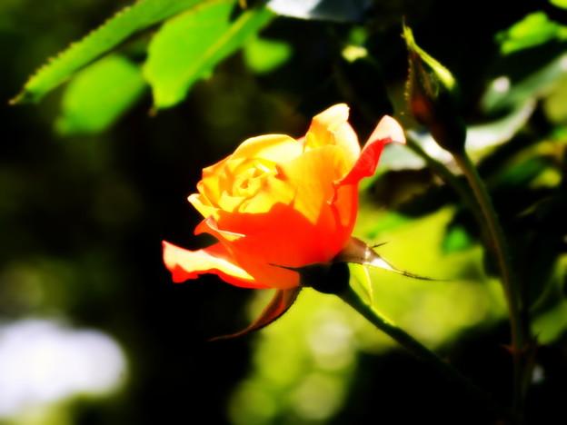 Photos: DSC_2082