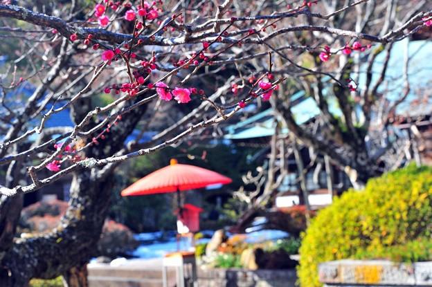 04春の日和