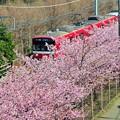 写真: 11桜並木通過