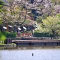05桜日和
