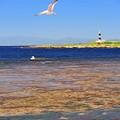 写真: 17海面の美
