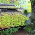 Photos: 14 苔覆う屋根