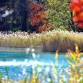 写真: 11 湖面の片隅