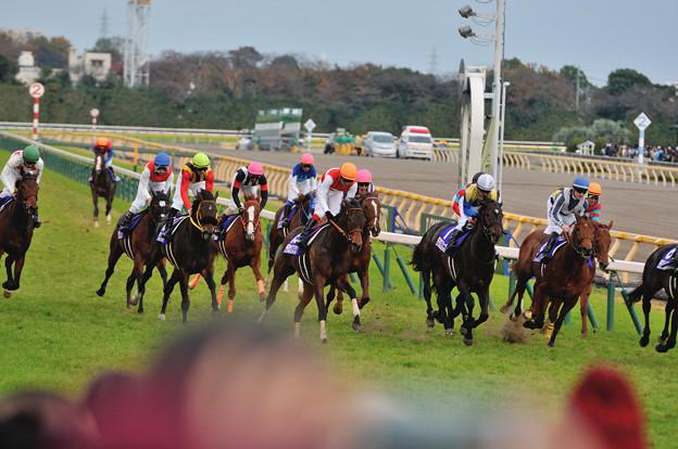 第35回ジャパンカップ優勝馬 ショウナンパンドラ号