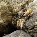 写真: [2]ニホンミツバチの巣