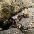 [3]ニホンミツバチの巣