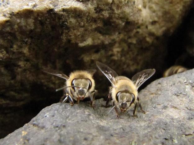 [4]ニホンミツバチの巣