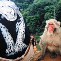 写真: 私と雌猿