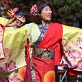 Photos: おどるんや秋2017 楽舞和07
