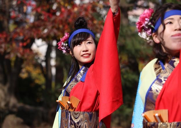 おどるんや秋2017 楽舞和09