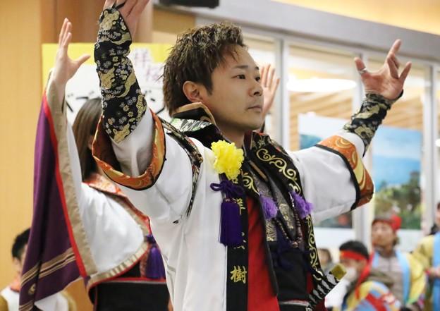 ちかよさ2018 吉祥桜樹20