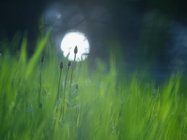写真: 黒目川の草むら