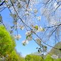 写真: 高原の春
