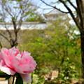 三の丸広場上段にある「千姫ぼたん園」です。