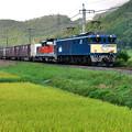 Photos: 山陰迂回貨物列車