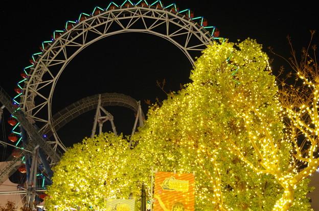 写真: 夜の銀杏