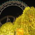 Photos: 夜の銀杏