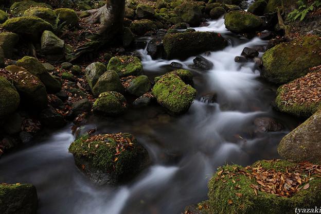 晩秋の渓流3