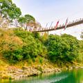 写真: 吊り橋と鯉のぼり