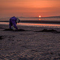 写真: 馬蛤貝(まてがい)獲り