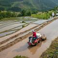 写真: 夕暮れ時の農作業