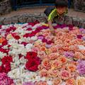 写真: rose pool