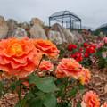 Photos: みなまたバラ園