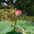 写真: 古刹の池