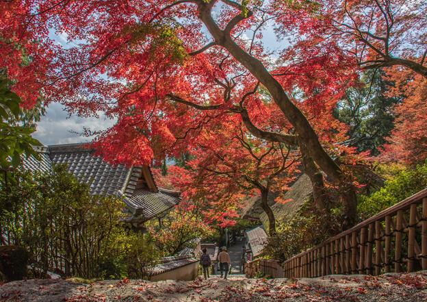 Photos: 大興善寺