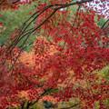 Photos: 大興善寺の紅葉