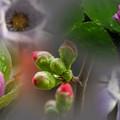 写真: 花 collage