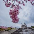 Photos: シンボルタワーと桜