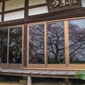 Photos: 春光寺の桜