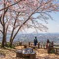 我が町の桜(2)
